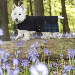 Black Watch Tartan Designer Westie Coat-Kilt