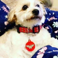 Wonder Woman ! Superhero pet I'd tags are hot in store this month at www.petidtagsexpress.co.uk #wonderdog #superherodog #superheropettag #pettag #pettags #petidtag #petidtags #petidtagsexpress #wonderwomanpettag